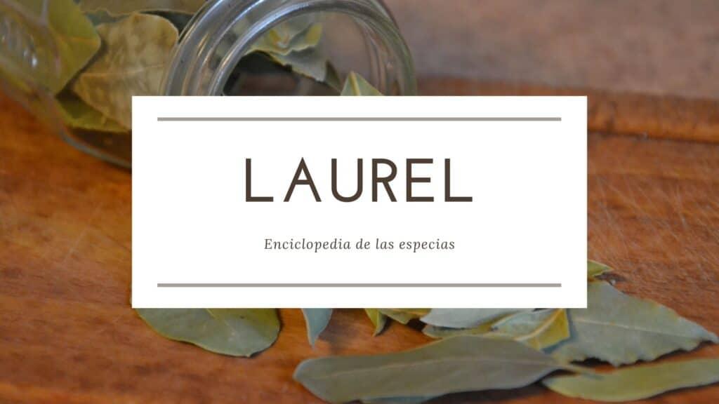 Laurel | Enciclopedia de las especias | Spirosa